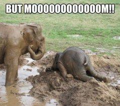 elephant.tantrum