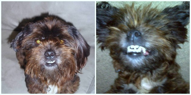 Max, the ewok, or gremlin, or demon dog.