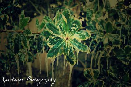 Frozen leaf. Edited with applications that require the use of a computer.